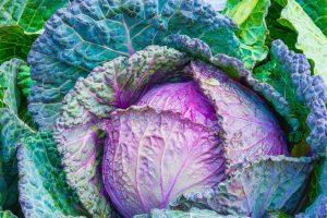 Naturopathic Doctors Guide to Groceries / Cabbage in Gilbert, AZ